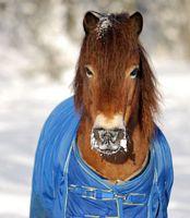 EFFEKT- bra förstahäst