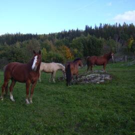 Lediga hästar sommar/vinter/helår 20190501